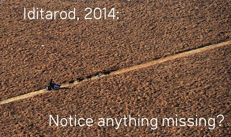 Iditarod Dogsled Race, 2014  http://mashable.com/2014/03/11/gallery-snowless-2014-iditarod/