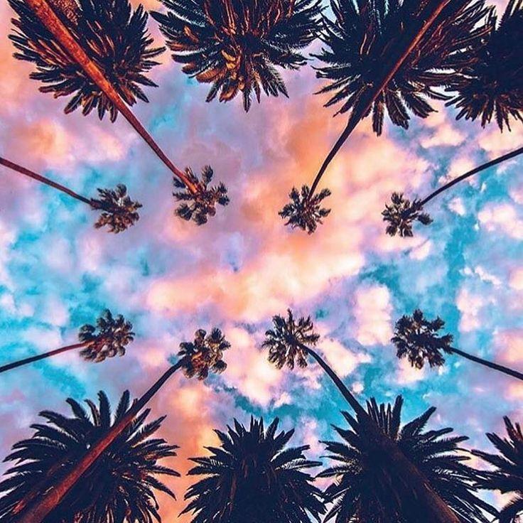 """Mi piace"": 514, commenti: 6 - t r o p i c a  (@findmeinthetropica) su Instagram: ""Palmy Skies   @theglobewanderer by @paolo.fortades #summer #instasummer #travel #travelgram…"""