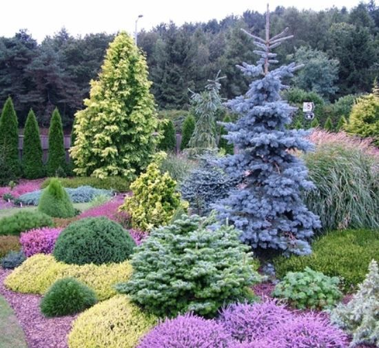 Best evergreen garden ideas on pinterest for Semi formal garden designs