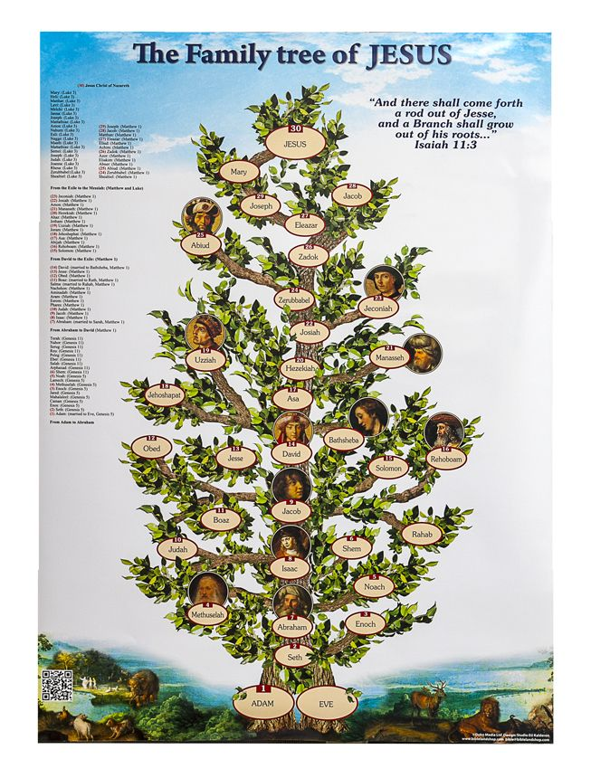 It's just a picture of Soft Genealogy Tree Images