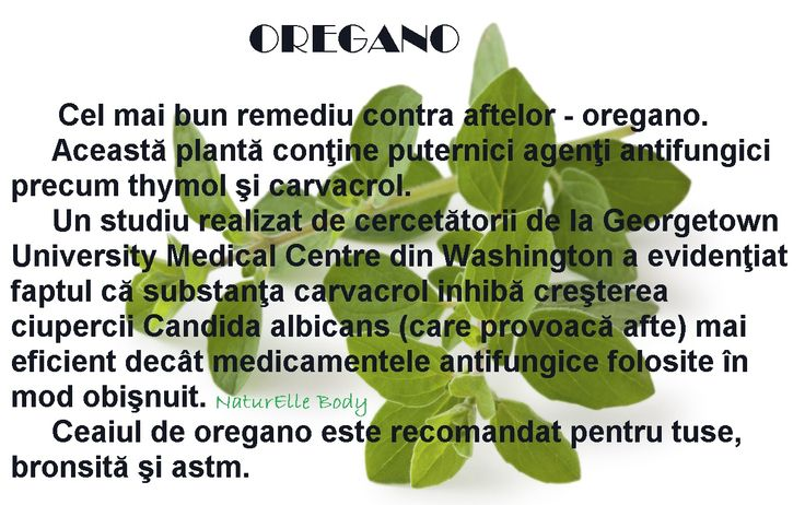 Beneficiile plantei OREGANO