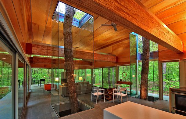 Стволы за стеклом, Западная Вирджиния
