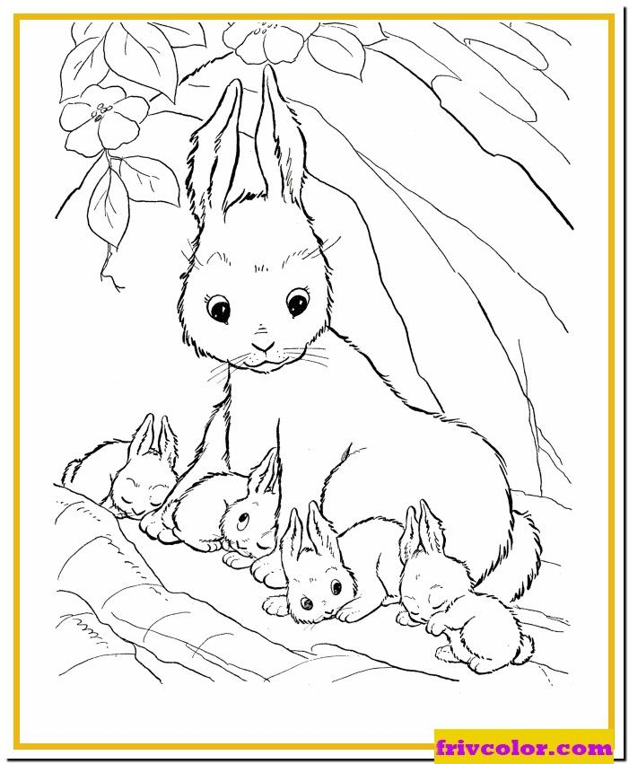 Easter Bunny Family Bunny Coloring Pages Farm Animal Coloring Pages Animal Coloring Pages