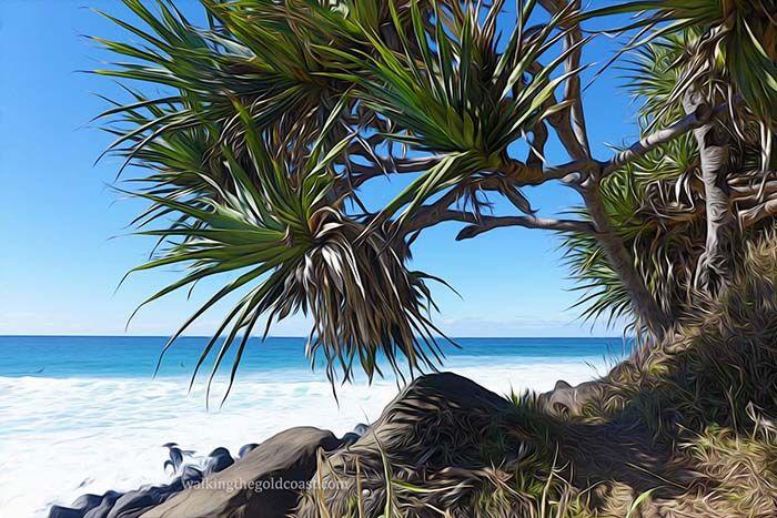 Pandanus Palms Burleigh Headland