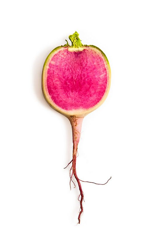 Rainbow Radish, by Phil Kline.