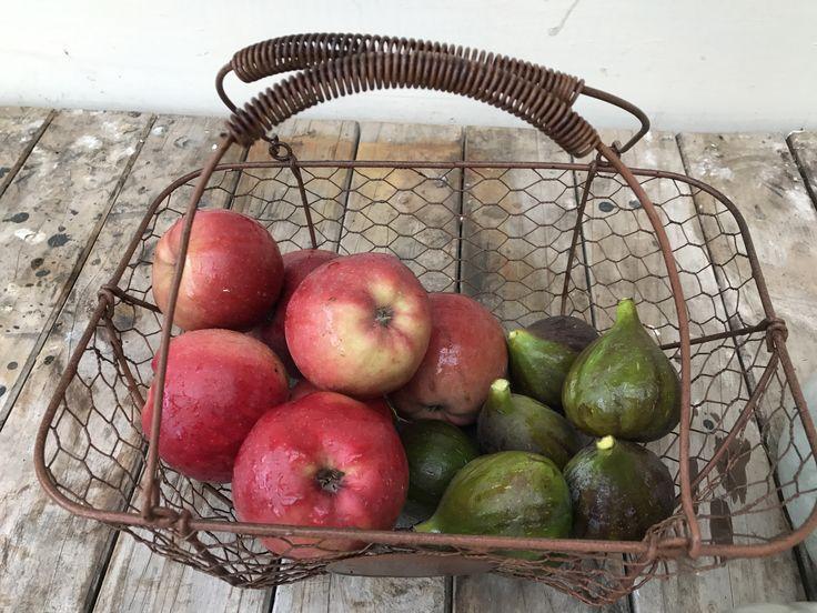 Fig and apple harvest at Old Ormondville Police Station 1884 Autumn 2017