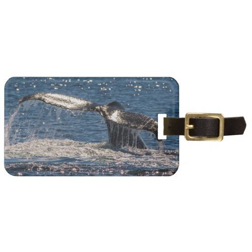 This luggage tag features a Humpback whale on its annual migration showing its tail fluke in the waters off Surfer's Paradise, Australia. #whale #humpback #ocean #sea #wildlife #nature #tail #tailfluke #migration