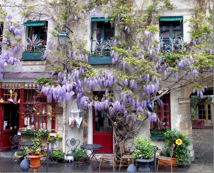wisteriaFrench Cafes, Beautiful, Paris Restaurants, Wisteria, Gardens, Places, Flower, Cafes K-Cup, Caramel Apples