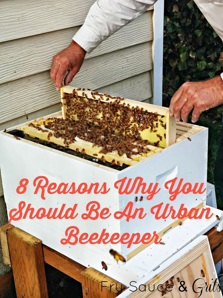 Why You Should Be An Urban Beekeeper from Fry Sauce and Grits