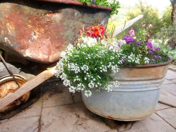 Using Galvanized Containers In The Garden.Donu0027t We Love Galvanized  Containers At Flea Market Gardening?