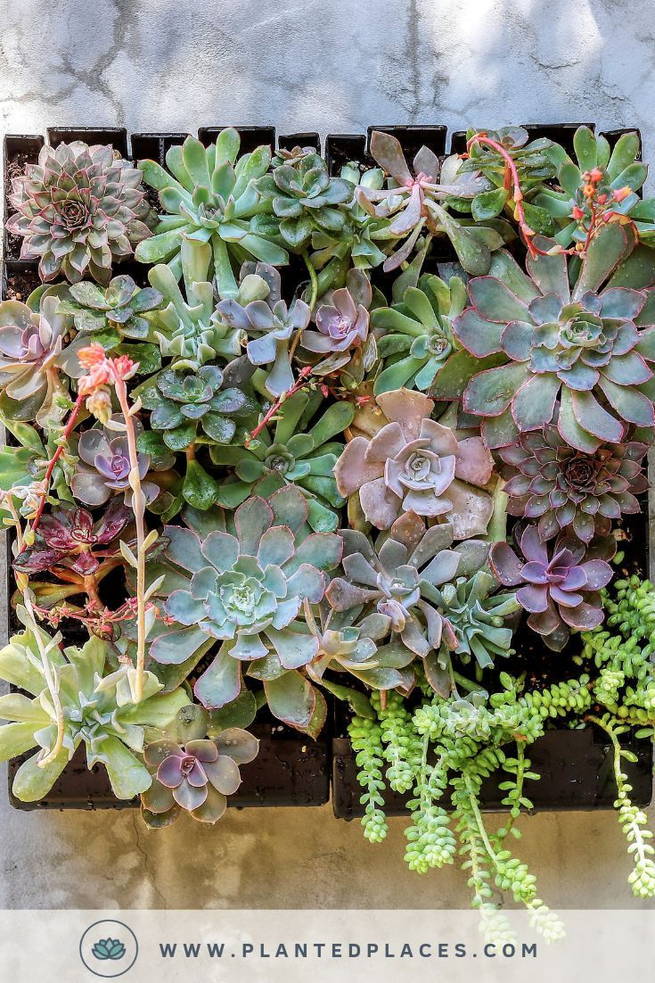 Succulent Wall Garden Kits In 2020 Succulent Wall Garden Succulents Diy Garden Projects