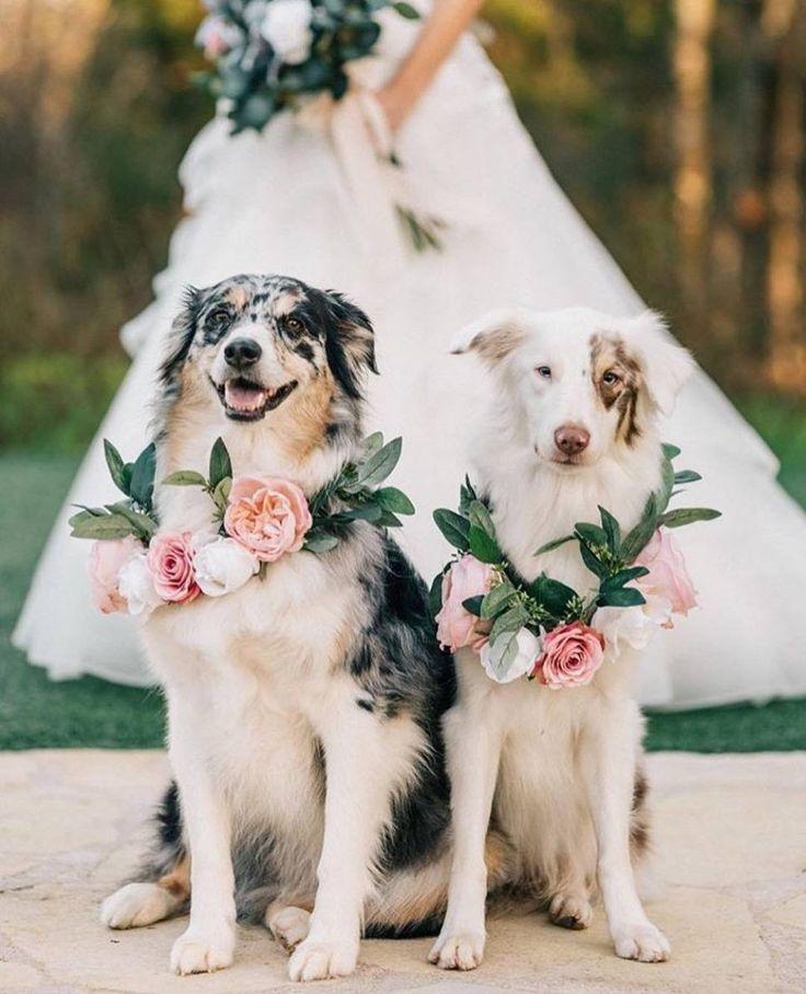 минуты картинки свадебные про животных разрушения