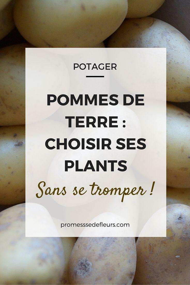 Pommes de terres au potager : comment choisir ses variétés ? Tous nos conseils et nos variétés préférées ! #potager #pommedeterre