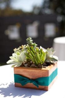 love these succulent centerpieces