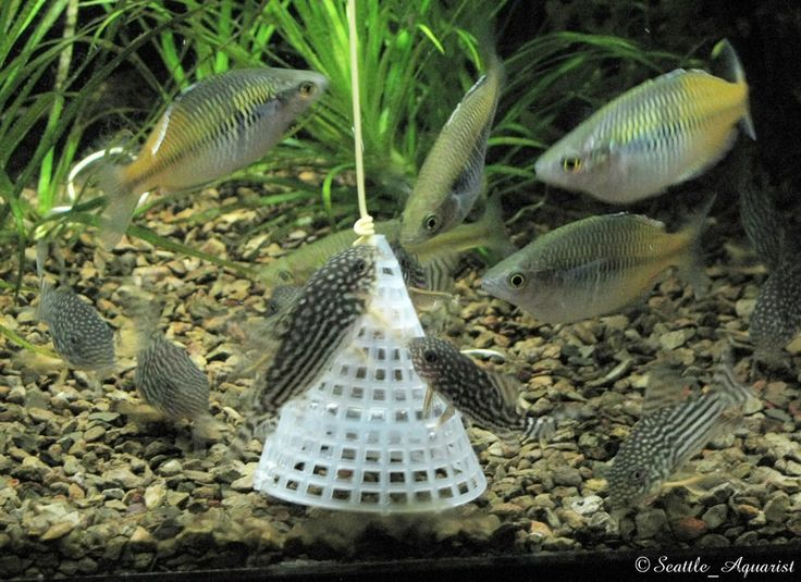 238 best ideas about aquarium on pinterest article html for Best way to freeze fish