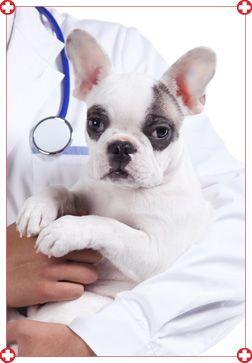 Hôpital vétérinaire Moffet Inc. 2380, Boul. Louis-XIV, Québec (Québec)  G1C 5Y8