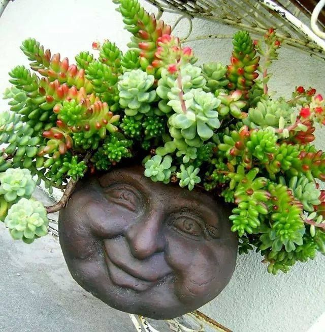 Succulent wall planter