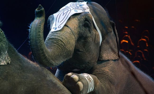 Success! Ringling Bros. to End Elephant Acts 18 Months Ahead of Schedule | Care2 Causes