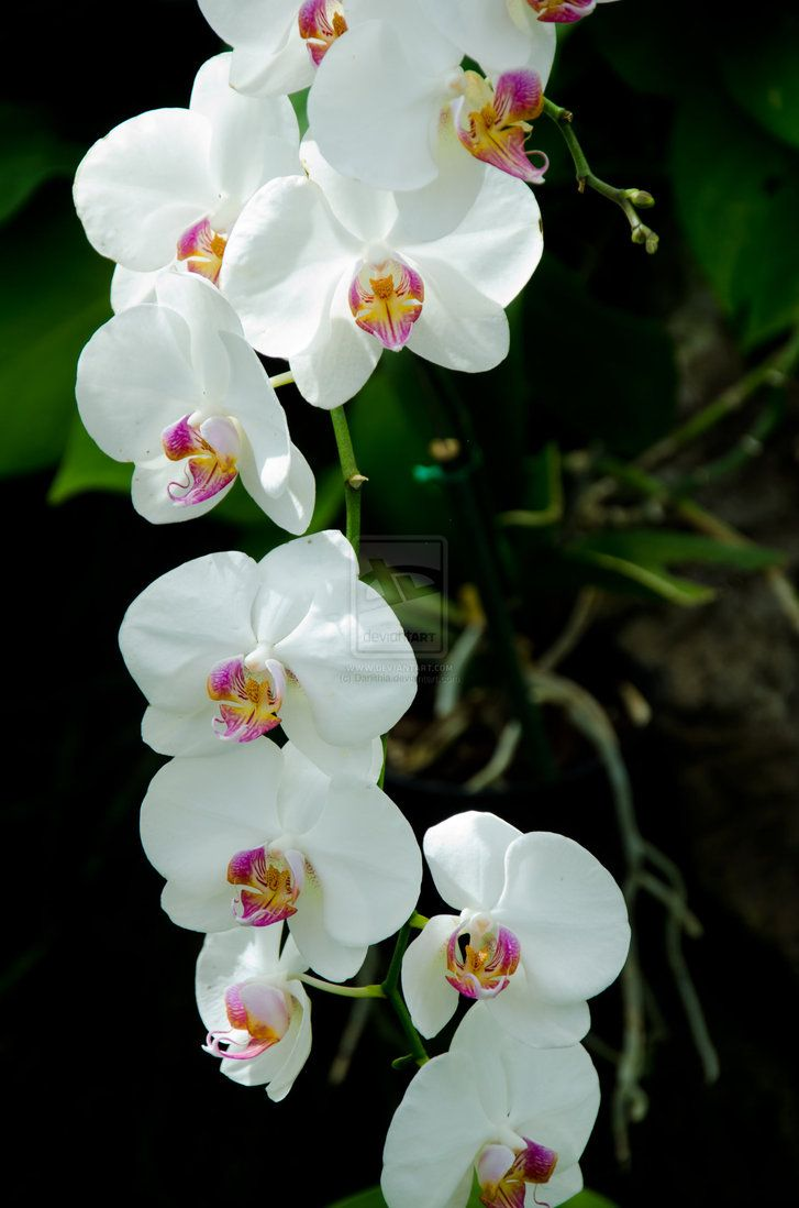 Went to an Orchid Farm in Hawaii: Beautiful flowers! part of tattoo idea