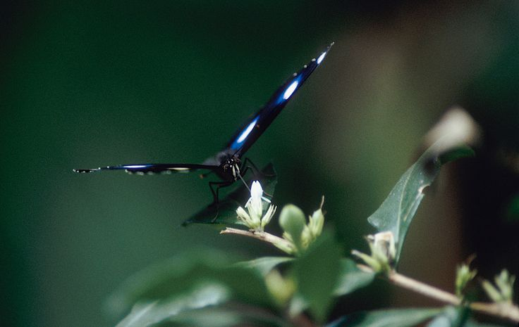Photographer Pernille Westh | Butterfly · Get my 7 FREE basic photography tips - you need to know! http://pw5383.wixsite.com/free-photo-tips
