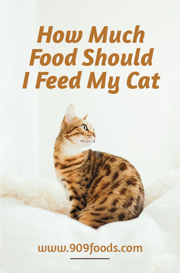 How Much Food Should I Feed My Cat Cats Carnivorous Animals