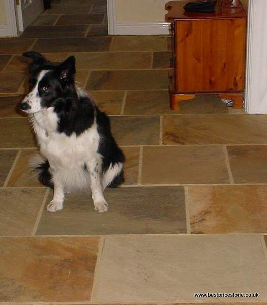 Fossil Sandstone - doggy poser !