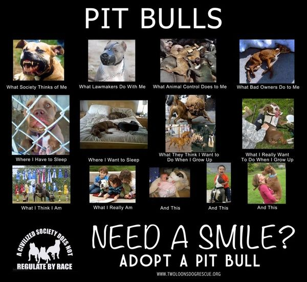 Pit bulls....yep I'm a pit lover! Say what you want,but they are amazing dogs until ruined by people through breeding and training!
