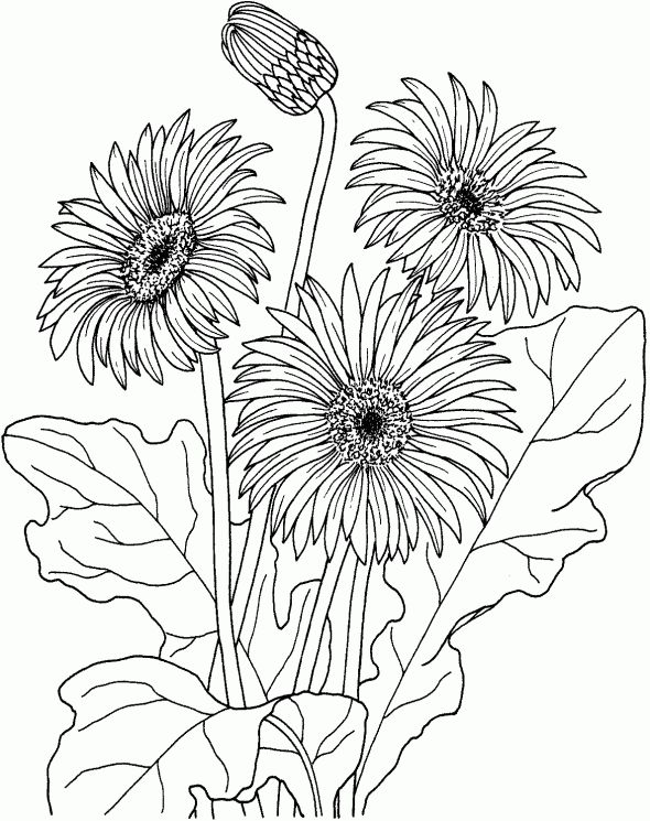 Summer Flower Coloring Pages Tulip Gerbera For Teenagers