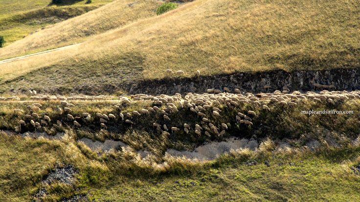 Flocks trails...