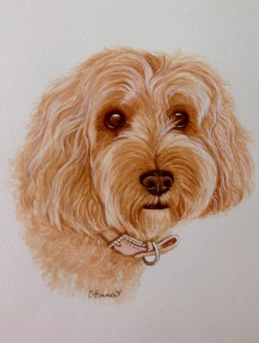 "Pet Portrait in Watercolours - A Commission A Labradoodle! Prices start from £95 for Pencil and £125 for Watercolours. Please like her page ""Carole Emment Artist"" on Facebook"