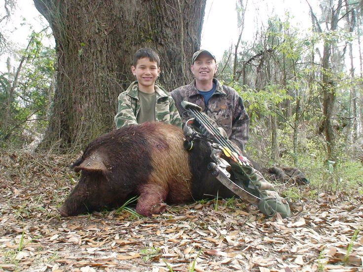 Free Range Wild Boar Bow hunt in Florida for HOGS! hunting with ...
