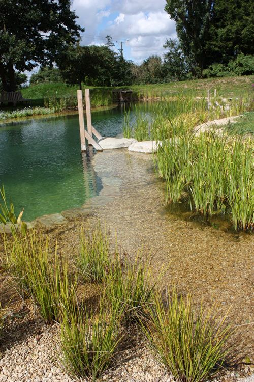 Freshwater pond swimming pool