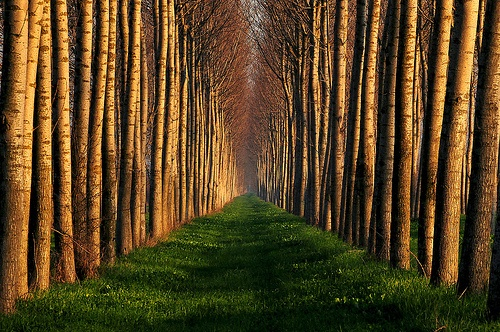 trees.: Forests, Favorit Place, Closet Doors, Birches, Walks, Paths, Trees Wow, Photo, Roads
