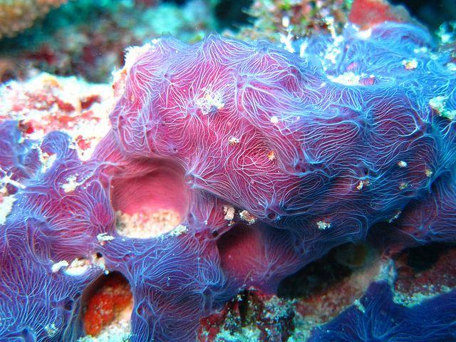 real ocean sponges - 640×480