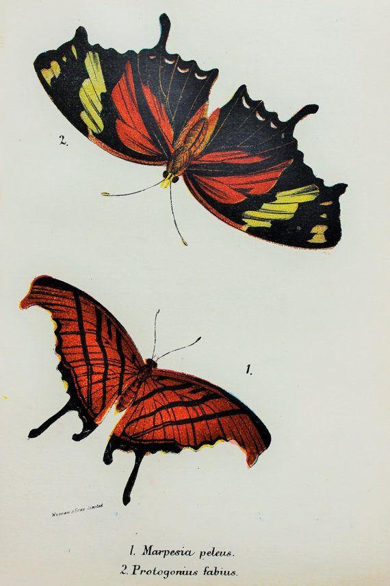 Beautiful Butterflies in Brown & Orange Orange by PaperPopinjay, $10.00