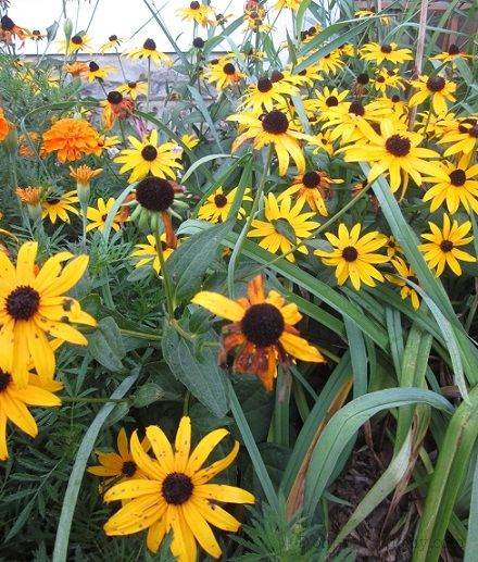 21 best a long lasting flowers images on pinterest for Plants that need little care