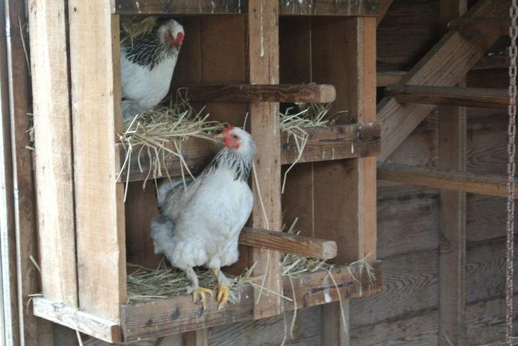 chicken coop at ardenwood historic farm, fremont