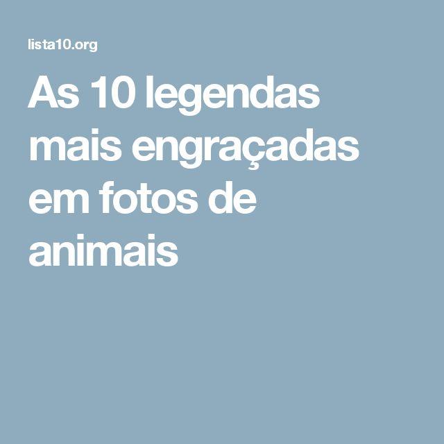 As 10 legendas mais engraçadas em fotos de animais