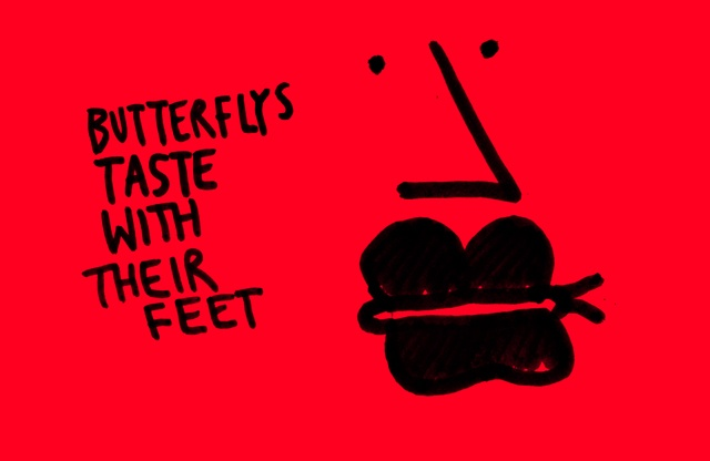 Butterflies taste with their feet