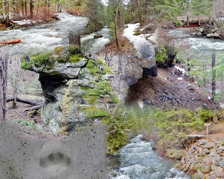https://flic.kr/s/aHskCvsVrV | BADGER CREEK | Not a whole lot to see other than the creek and some interesting rock formations. Still snow on the trail. Was a small 5' waterfall somewhere; however, there was so much water flowing it was buried. Did see what we believe to be bobcat tracks. 7 Mile Round Trip; 614' Elevation Gain. GPS