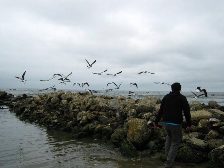 Playa de Arauco