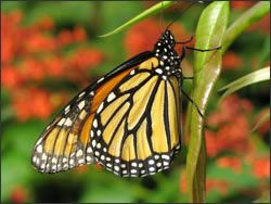 """""""Wings of Fancy"""" Live Butterfly & Caterpillar Exhibit @ Brookside Gardens South Conservatory"""