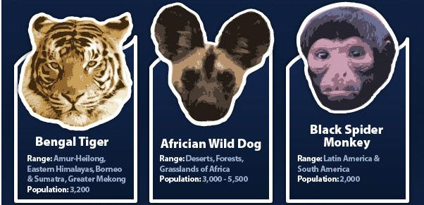 Endangered Animals of the World - This new infographic from Inis Environmental Consultants aims to raise awareness about some of the animals of the world that face dangerously low population levels, including orangutans, tigers, rhinos, pandas and more.
