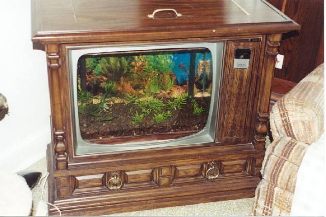 les 25 meilleures id es de la cat gorie aquarium domicile sur pinterest aquarium geant. Black Bedroom Furniture Sets. Home Design Ideas