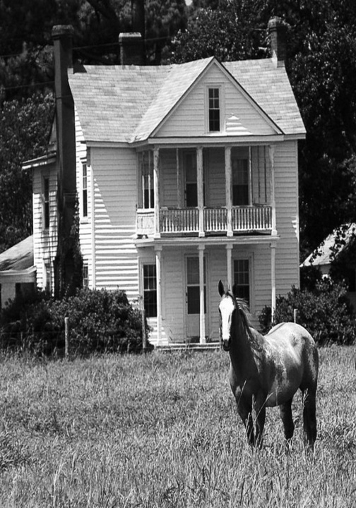 Old Farm House With Horse In Front- I want..(the house not the horse! )