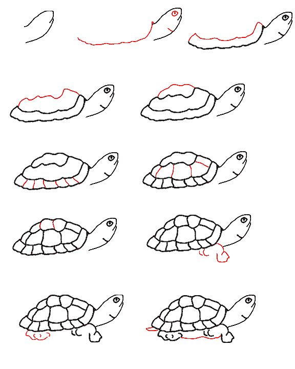 How to draw a turtle Step by step Animals Complete Drawing