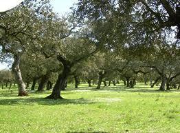 Extensas zonas de Andalucía Occidental han sido intervenidas por el hombre, manipulando y transformando el bosque mediterráneo originario para dar lugar a ...