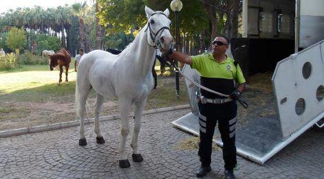 Türkiye, kahraman polis Fethi Sekin'e ağlıyor!