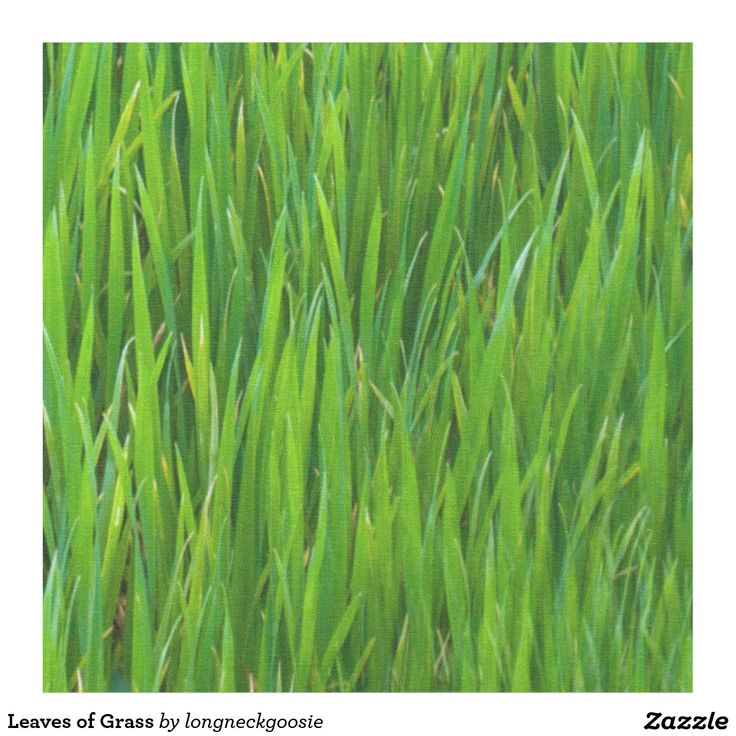 Leaves of Grass Fabric #Easter #Spring #Quilting #SewYourOwn #SYO #Quilt #Green #Grass #GreenGrass #Fabric #Crafts #Crafting #Crafty #Lawn http://www.Zazzle.com/LongNeckGoosie* #Outdoorsy #GoPlayOutside #AprilShowers #MayFlowers #AprilShowersBringMayFlowers #Fresh #ReBirth #Jesus #EasterBasket