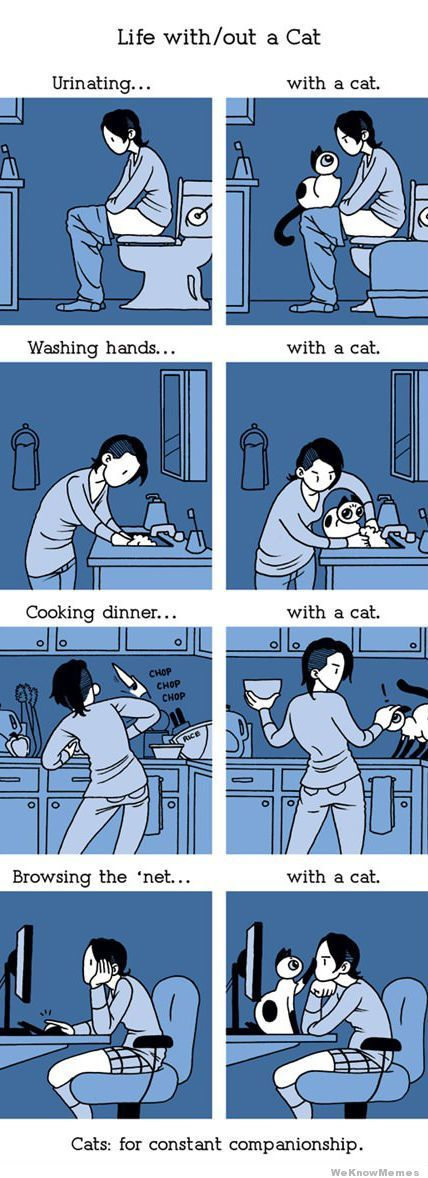 SO funny! :) By cat is all of the above